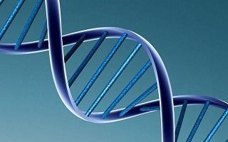 La génétique : un des facteurs qui détermine la forme des fessiers